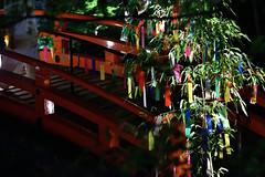 DSC_4028 (kazuchan_nara) Tags:   kyoto japan kitanotenmangu