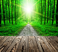 wood texture (lisame0511) Tags: architecture art background beam blank board brown building desk empty fence floor foliage forest frame green home indoor interior leafy leaves light natural nature panel park parquet path pattern picture plank ray retro season shine single sun sunlight tabl table text texture textured tree trunk wall white wood wooden yard ukraine