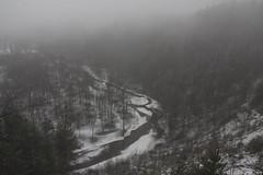 last days of winter (Mindaugas Buivydas) Tags: lietuva lithuania river vilnia fog mist color pukoriai pavilniairegionalpark pavilniregioninisparkas winter february mood moody sadnature dark darkness