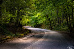 Lonely road. (Rodolfo Giuliana) Tags: road strada lonely ombre shadow shadows luci lights alone nature natura verde green forest foresta bosco gargano love tree alberi fitto freddo
