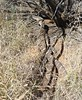Cassia Hill Walk (Wilderness Kev) Tags: australia northernterritory tjoritjawestmacdonnellnationalpark simpsonsgap cassiahillwalk day14 redcentreholiday2016
