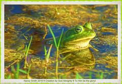 Pig Frog painted (NancySmith133) Tags: pigfrog lakeapopkanorthshorewildlifedrive centralfloridausa orangecountyfl painterly paintingthephotograph photopaintingsoutdoorscenes textura