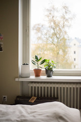 Lazy (junestarrr) Tags: home interior decor finland window windowsill bed bedroom plant wall