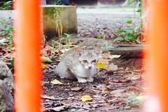 Today's Cat@2016-09-11 (masatsu) Tags: cat thebiggestgroupwithonlycats catspotting pentax mx1