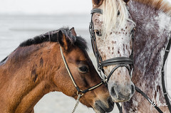 Dependance (Yosha Photography) Tags: equine horse horses pony emotion friendship dependance love petportrait animal freckles