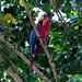 Un pappagallo attira l'attenzione dall'alto