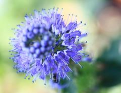 Flowers / () (TANAKA Juuyoh ()) Tags: park flower high blossom hires chiba resolution 5d hi  res markii kashiwa  akebonoyama