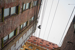 gastown-near-jj-bean-and-woodwards-20121011-3.jpg (roland) Tags: vancouver wire alley shoes lane rolandtanglaophoto gastown shoesonawire shoefiti canon5dmki canonef40mmf28