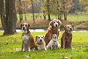 The House Dogs (miss_n_arrow) Tags: autumn dog house dogs rio jack golden mix kirby russell hound canine retriever juneau terrier boxer pudge tilly canines huskador highqualitydogs