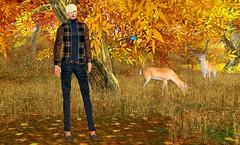 11.   Fall Fashions (Brockway Mellark MR. V♛ CANADA 2013) Tags: autumn fall gabriel mesh shag fallfashion gizza izzies thebodyco brockwaymellark