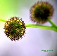 beautiful YOU (dimitra_milaiou) Tags: world life 2 two macro tree green love nature beautiful b