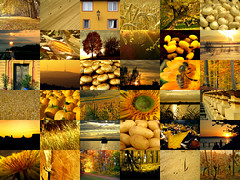 Golden Moments (Batikart) Tags: door autumn light sunset sea sky urban mountain snow flower macro reflection building tree beach reed window nature mushroom lamp field leaves silhouette collage closeup backlight rural forest plane canon germany pumpkin landscape geotagged outdoors deutschland golden evening boat leaf vineyard potatoes corn europa europe ship path wheat tranquility fishnet romance dandelion bee collection potato sunflower trunk grasses onion recreation lantern relaxation monumentvalley ursula footprint grapevine 2012 balustrade canonpowershot sander 100faves traveldestination viewonblack batikart 201310