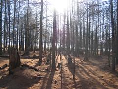 Wood by Khovsgol lake in Mongolia (mbphillips) Tags: nomad モンゴル 몽골 蒙古 asia アジア 아시아 亚洲 亞洲 mbphillips canonixus400 lake 호수 湖 lago geotagged photojournalism photojournalist mongolia 몽골리아 mongolie