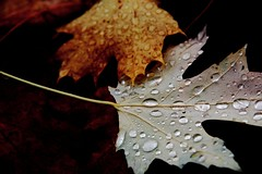 Herbstlaub (tobfl) Tags: world life camera autumn winter art leave water beauty canon eos photo nikon wasser europe flickr foto shot shots no herbst picture bubbles fallen dslr bltter iphone welt nonikon 60d noiphone iphonegrapy noiphoneography