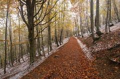 Primeras nieves (elosoenpersona) Tags: parque autumn espaa snow fall geotagged spain nieve asturias otoo cordillera redes tarna cantabrica tabayon mongayu elosoenpersona