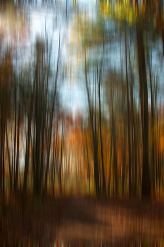 Autumn Blur 3