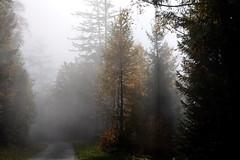 le stratus se dissipe.... :) (bulbocode909) Tags: jaune automne suisse arbres brouillard valais montagnes forts