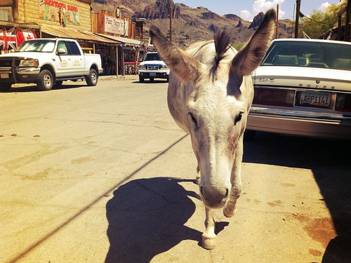 "Wild Burro - Historic Route 66 - Oatman Arizona • <a style=""font-size:0.8em;"" href=""http://www.flickr.com/photos/20810644@N05/8142804517/"" target=""_blank"">View on Flickr</a>"
