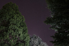 Straight Through (bradtrone) Tags: trees sky newmexico santafe night canon stars nightscape 5d