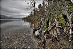 Rowardennan (Mandlenkhosi) Tags: lake tree landscape scotland nikon roots sigma wideangle loch hdr lochlomond treeroots sigma1020mm rowardennan sigma1020 d5100 nikond5100