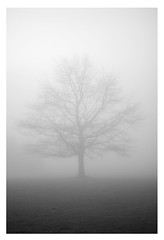 Through the fog 11/365 2013 (DSLR) (@Dave) Tags: white mist black tree oneaday fog dave 50mm james nikon 14 photoaday nikkor dslr pictureaday 2013 d40x 2013inphotos pad2013365