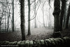 misty woodland fence (pixellesley) Tags: trees leaves misty wall fence woodland moss still quiet foggy eerie barebranches hff theworldwelivein magicunicornverybest magicunicornmasterpiece bleachedoutcolour