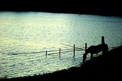 Bombeando a noite... (Eduardo Amorim) Tags: brazil horses horse southamerica field gua night criollo caballo cheval caballos noche agua mare nacht dam barragem campo noite cavalos pelotas damm pferde nuit cavalli cavallo cavalo pferd riograndedosul notte barrage pampa champ hest aguada hevonen campanha brsil chevaux gua  yegua amricadosul aude diga hst  amriquedusud   sudamrica suramrica amricadelsur  crioulo caballoscriollos criollos   americadelsud  crioulos cavalocrioulo americameridionale caballocriollo auffangen eduardoamorim cavaloscrioulos