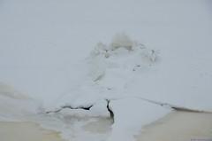 DR2_6225 (Riku Kettunen) Tags: winter snow ice suomi finland helsinki nieve invierno fin lumi talvi hielo finlandia toolo toolonlahti jaa