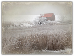little barn (Wilma van Oorschot) Tags: winter snow hansweert schore angelphotography rememberthatmomentlevel4 rememberthatmomentlevel1 olympusem5 rememberthatmomentlevel2 rememberthatmomentlevel3 rememberthatmomentlevel5 rememberthatmomentlevel6 vigilantphotographersunite wilmavanoorschot mzuikodigitaled1250mm13563