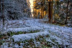 Thetford forest in winter (Nigel Blake, 13 MILLION...Yay! Many thanks!) Tags: winter snow cold nature rural forest landscape photography countryside suffolk frost blake nigel thetford