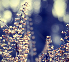 Daydreaming (Venusian Lady) Tags: abstract nature beautiful field landscape dof bokeh dream dreams softtones