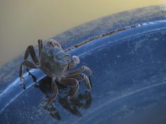 Cangrejo sobre neumtico (Mels G.) Tags: summer argentina animals port canon puerto buenosaires crab verano animales sanclemente seaport cangrejo puertodesanclemente