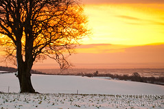 Winter Sunrise (GarethJohns) Tags: winter red orange sun snow cold tree yellow sunrise landscape nikon pretty glow cardiff scenic freezing lonely lonelytree cefn mably d5000