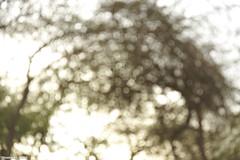 Blur & light .. (Hosam AL-Hwid) Tags: morning trees light sky sun white blur green texture circles sony saudi arabia a77 hosam alhwid
