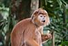 Singapore Zoo-220 (Jon Durman) Tags: animals zoo nikon wildlife april 2012 singaporezoo nikond700 nikon28300mm