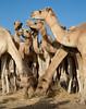 Somaliland 2013