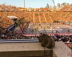 Buddy at the 2016 CrossFit Games (Mitymous) Tags: games buddybison crossfitgames summer16 carson california unitedstates
