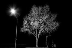 trees at night III (Zesk MF) Tags: bw black white trees night nachts dark bume city natur minimal zesk