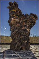(MarioVolpi) Tags: argentina argentine canon60d la plata esculturas arbol tronco hdr contraluz