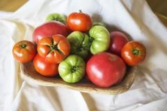 August sunlight (Sunset Sailor) Tags: tomatoes green red heirloom bigbeef harvest crop food