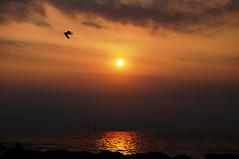 DSC09684 (Mrockdaimajin) Tags: sun sunset sky yokosuka miura kanagawa seascaps sony slta57 57  arasaki