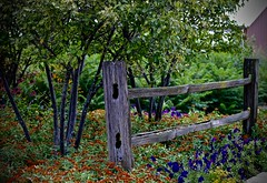 Peck Farm - Explore #400 - 8-16-2016  - Geneva Illinois (Meridith112) Tags: fence illinois geneva farm il kanecounty peckfarm genevaparkdistrict fencefriday flowers summer flower nikon midwest august 2016 hff nikon105 happyfencefriday nikond610 explore explored explore8162016