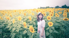 Young woman standing in sunflower field (Apricot Cafe) Tags: asianethnicity canonef1635mmf28liiusm japan kanagawa enjoy happiness nature oneperson outdoor refresh strawhat summer sunflower traveldestinations vacation walking weekendactivities woman youngadult zamashi kanagawaken jp img647049
