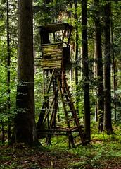 Dringender Handlungsbedarf (Gerd Trynka-Ottosohn) Tags: ottosohnfoto germany gerdtrynka hochsitz wald forest bume fujifilmx100s tlc
