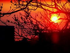 New York Sunset (dimaruss34) Tags: newyork brooklyn dmitriyfomenko image brilliant