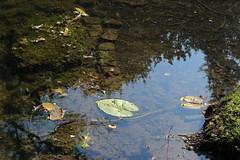 IMG_7080 (Padeia) Tags: 2016 padeia canon germany mnchengladbach rheydt rheydterschlosspark schlossparkrheydt schlosspark pond weiher water wasser reflection outdoor dslr
