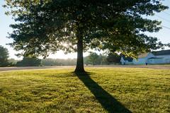 untitled (Homemade) Tags: tree sonydscrx100 onatrufarmpark southsalem lewisboro sunrise westchestercounty newyork ny