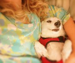 Bliss (flowerweaver) Tags: nationaldogday bliss dog pet snuggle thankful smile happiness