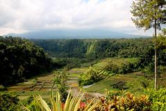 IMG_0159 (Marta Montull) Tags: holidays indonesia canon gopro malaysia kuala lumpur bali gili islands rice terraces temples monkey travel photography landscape