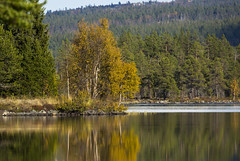 "Autumn birch (Vidar ""the Viking"" Ringstad, Norway) Tags: autumn warm water lake hill sun sunshine leaf straw sky reflection mirror trees mountain mountainscape naturepic natureshot nature rocks canoneos5dmkiii hallingdal noreoguvdal tunhovd norge norway norwegen"